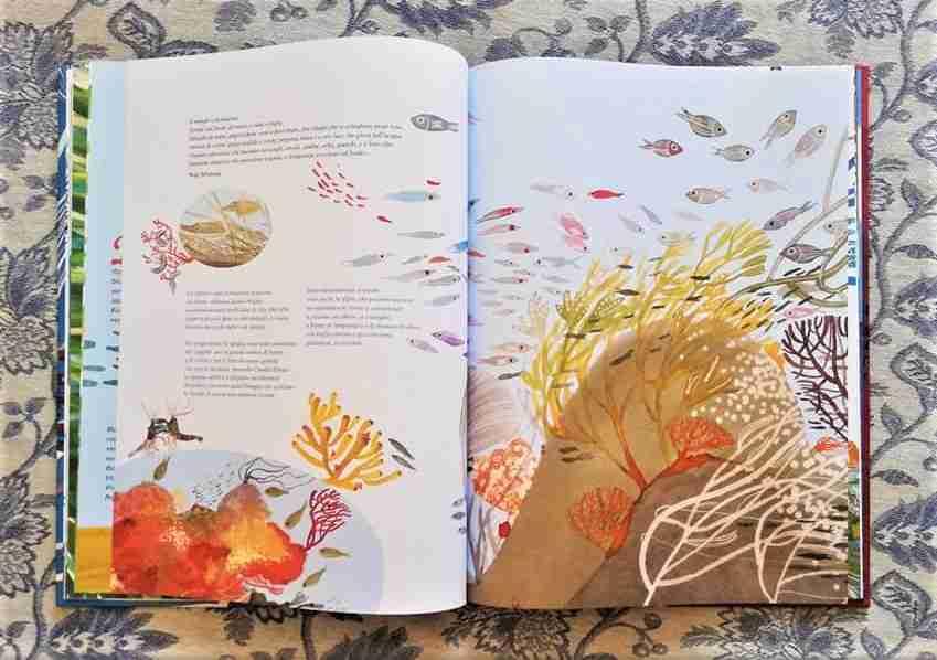RACCONTARE IL MARE illustrazioni del libro recensione